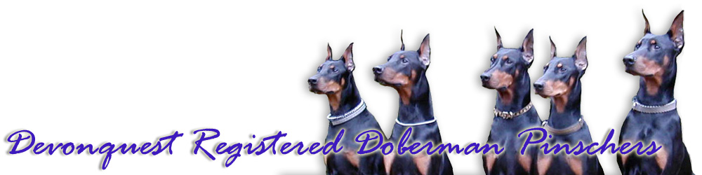 Devonquest Reg'd Doberman Pinchers
